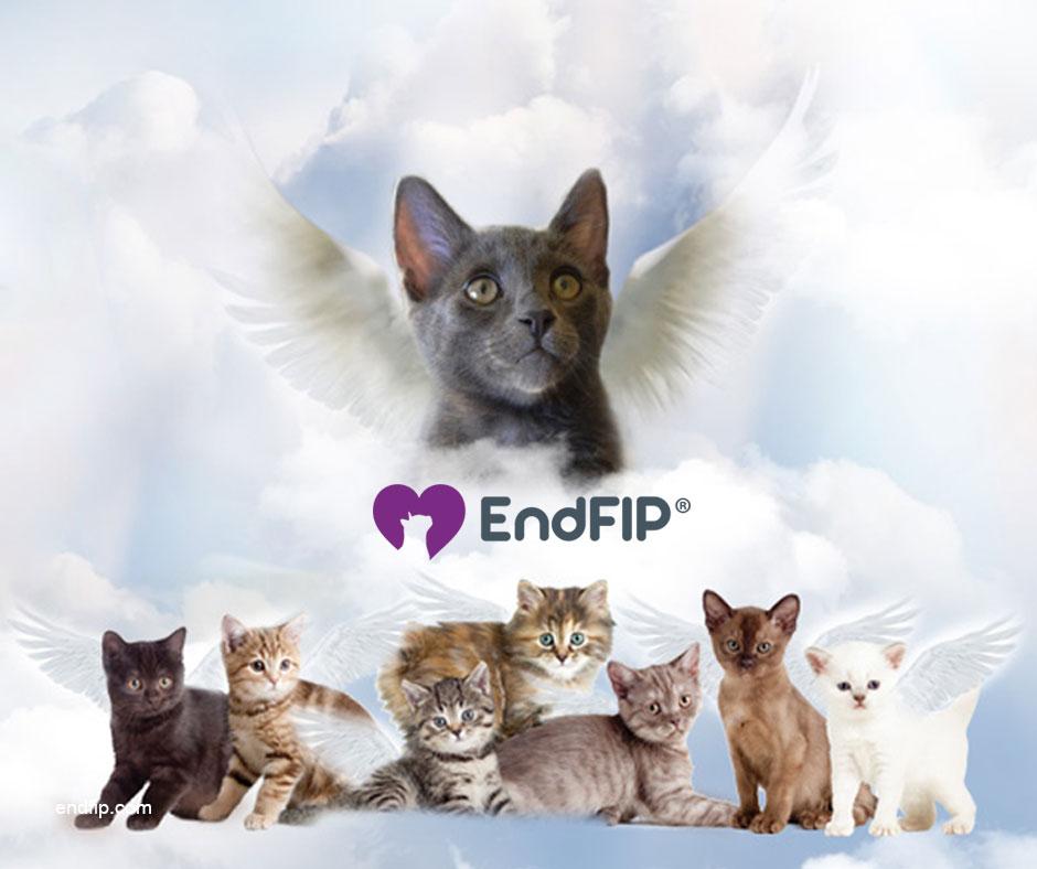 endfip® Easter 2019 newsletter