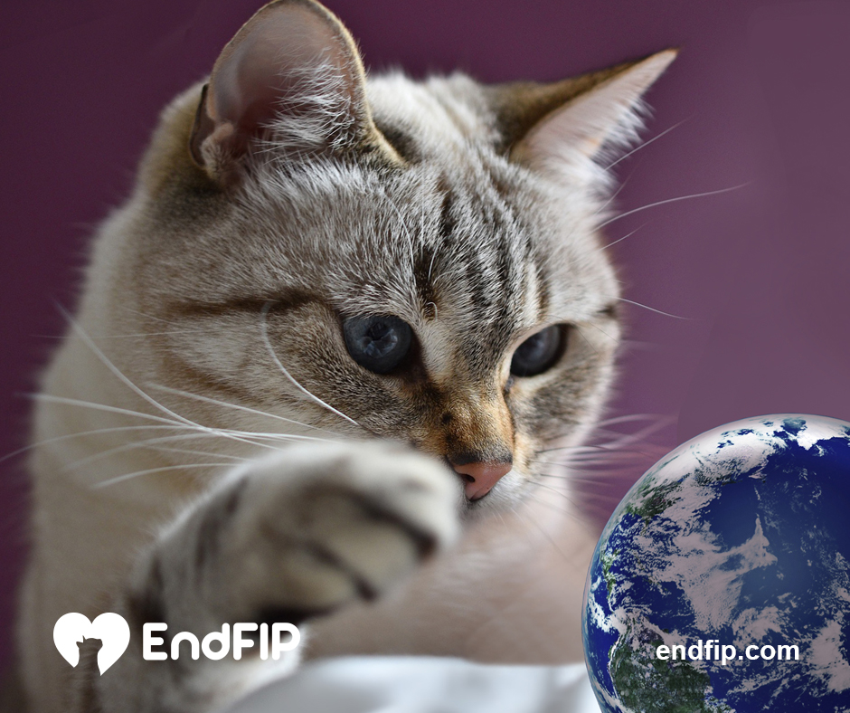 endfip® July 2019 newsletter
