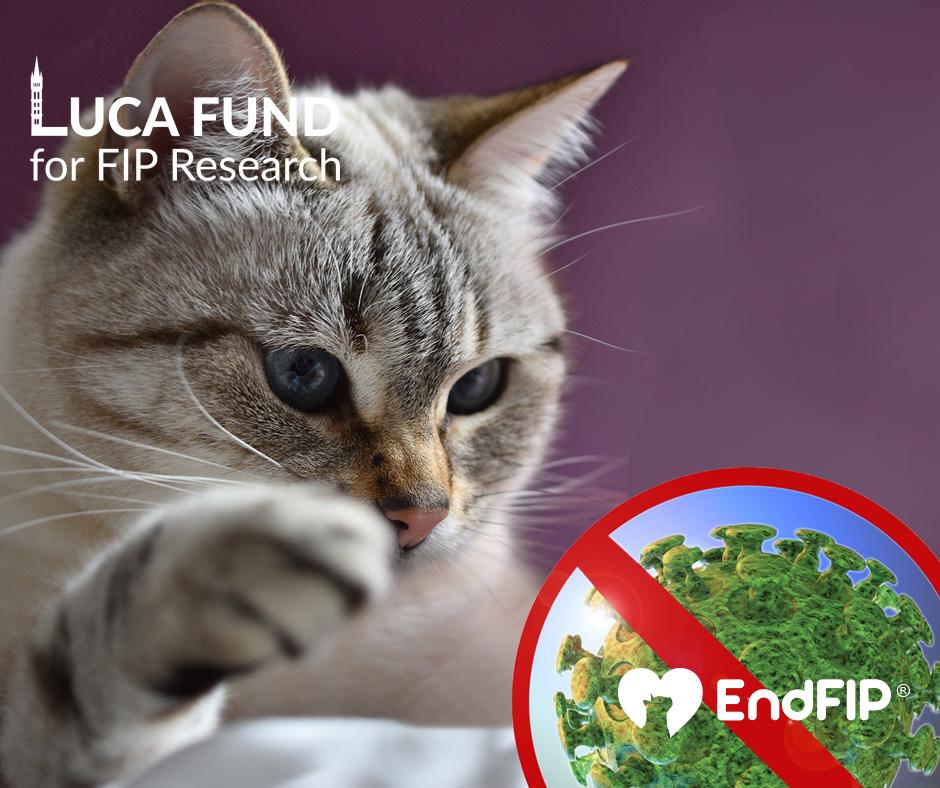 endfip® Spring 2020 newsletter