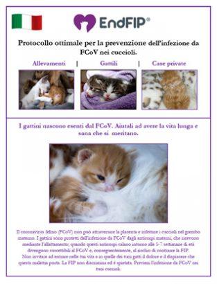 fcov-prevention-kitten-italian-th