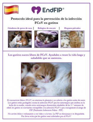 fcov-prevention-kitten-spanish-th