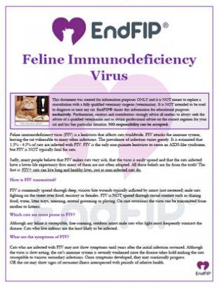 feline-immunodificiency-virus-th